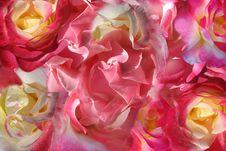 Free Rose Combo Background Stock Photo - 84981340