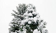 Free Snowy Christmas Tree Stock Photography - 84981792