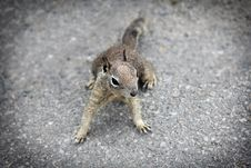 Free Week 7 &x28;February 15-21&x29; Squirrels Stock Photos - 84982483