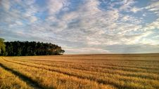 Free Field After Harvest Stock Photo - 84992000