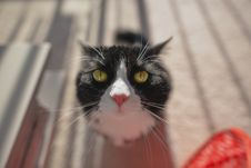 Free Selective Focus Photo Of Tuxedo Cat During Daytime Royalty Free Stock Photos - 84992268