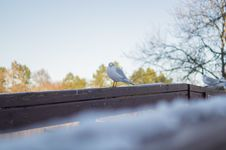 Free White And Gray Bird On Brown Wooden Handrail Stock Image - 84994631