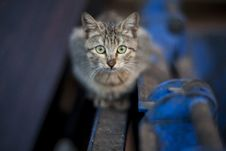 Free Portrait Of A Tabby Kitten Royalty Free Stock Image - 84996296