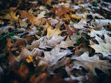 Free Oak Leaves On Ground Royalty Free Stock Photos - 84996668