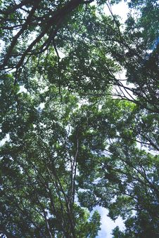 Free Treetops In Summer Stock Photography - 84997082