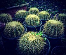 Free Cactus Plants In Pots Stock Image - 84997251
