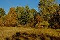 Free Autumn In Poland Royalty Free Stock Photo - 856725