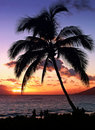 Free Tropical Sunset Royalty Free Stock Photos - 857108