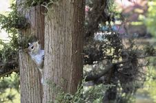 Free Squirrel On A Tree Stock Photography - 850112