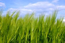 Green Field, Blue Sky Stock Photography