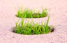 Free Grass Stock Photography - 852292