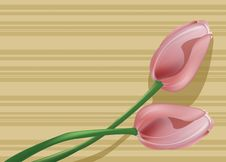 Free Two Tulips Stock Photography - 852322