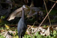 Free Bird Royalty Free Stock Photo - 853155