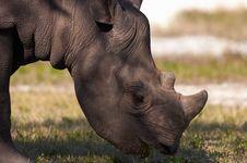 Free Rhino Stock Photo - 853330