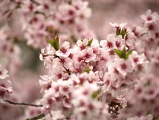Free Blossom Stock Images - 853764