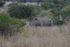 Free African Rhino Royalty Free Stock Photo - 854225