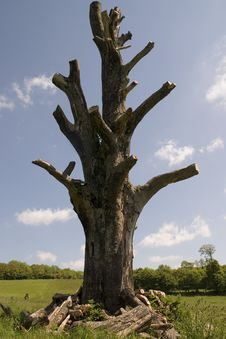 Free Dead Tree Stock Photography - 855912