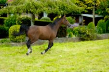 Free Horse In Action Royalty Free Stock Photos - 856328