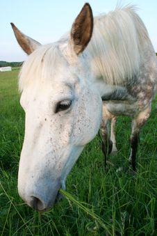 Free Horse Stock Photography - 857512