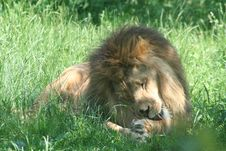 Free Animals Stock Photo - 858070