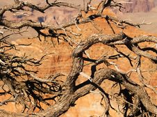 Free Grand Canyon Through Tree Branches Royalty Free Stock Photos - 858868