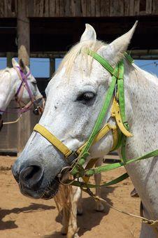Free Horse Portrait Royalty Free Stock Image - 858956