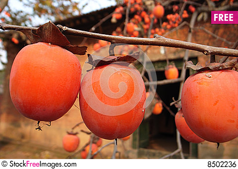 Free Persimmon Royalty Free Stock Image - 8502236