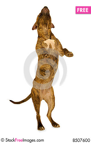 Standing Dog - Free Stock Photos & Images - 8507600 ...