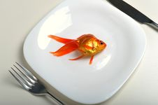 Free Goldfish In Plate Stock Photography - 8500132