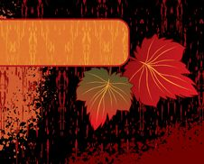 Free Floral Frame Stock Images - 8500144