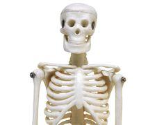 Free Artificial Skeleton Stock Photos - 8500373