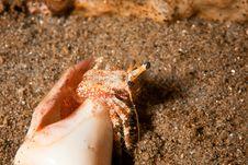 Free Reef Hermit Crab Stock Photos - 8500513