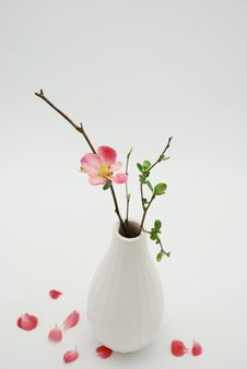 Free White Vase With Budding Branch Over White Stock Image - 8500561