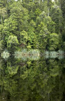 Reflection Of Trees On Lake Royalty Free Stock Photos