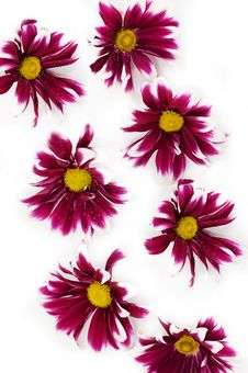 Free Flower Texture Stock Photography - 8502762
