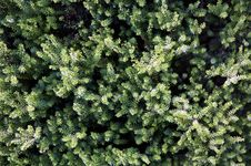 Free Detail Of Green Foliage Royalty Free Stock Images - 8502899