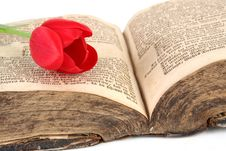 Free Red Tulip On Vintage Books Stock Photo - 8503320