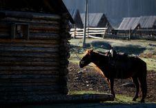 Free Horse Royalty Free Stock Image - 8503366