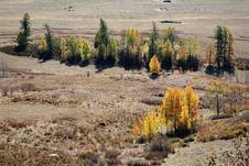 Free Autumn Royalty Free Stock Photography - 8503427