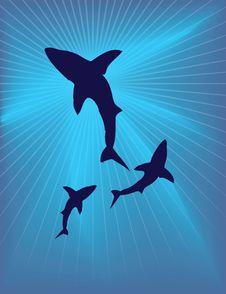 Free Caretta Under The Sea Stock Photography - 8504022