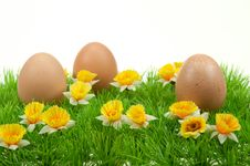 Free Easter Eggs In Spring Royalty Free Stock Images - 8504629