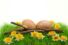 Free Easter Eggs In Spring Stock Photos - 8504643