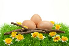 Free Easter Eggs In Spring Royalty Free Stock Photo - 8504655