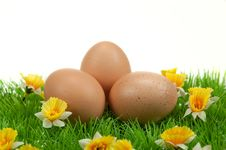 Free Easter Eggs In Spring Stock Image - 8504671