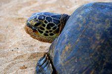 Green Sea Turtle 6 Royalty Free Stock Photos