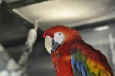 Free Macaw Stock Photos - 8505283