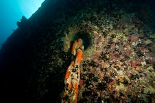 Free Starboard Anchor Chain Of The Thistlegorm Stock Images - 8506804
