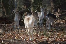 Free Young Deer Stock Photos - 8507173