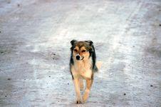 Free Snowdog Stock Images - 8507344