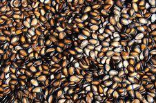 Free Seeds Stock Photo - 8507790